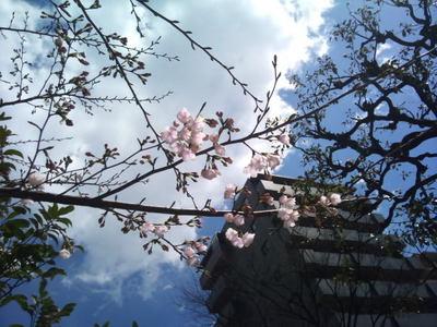 2012-04-04 12.27.03.jpg